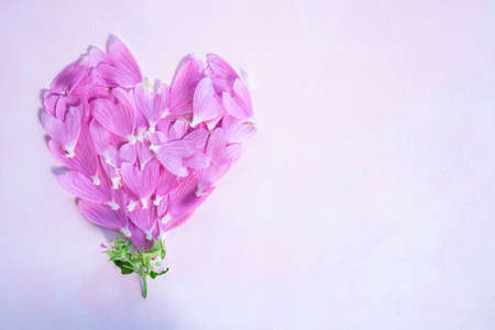 Heart of pink mallow petals on a light background with space for text. Card. 版權商用圖片