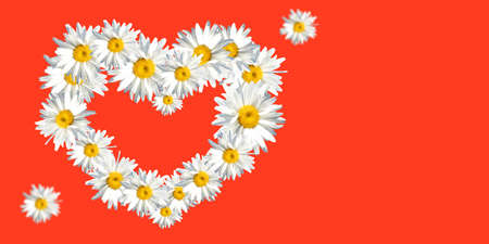 Heart of daisies on a red background with space for text. Postcard for the holiday of spring and love. 版權商用圖片