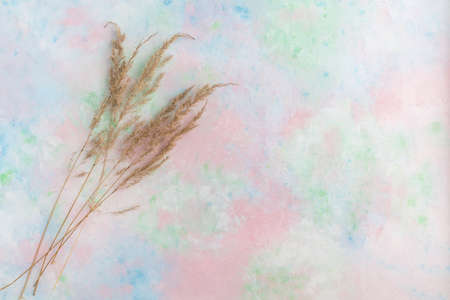 A multicolored pastel background of delicate shades with pampas grass. Template for your image.