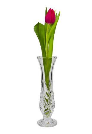 rote: Rote  Tulpe in eine Vase getrennt auf weißem Hintergrund.