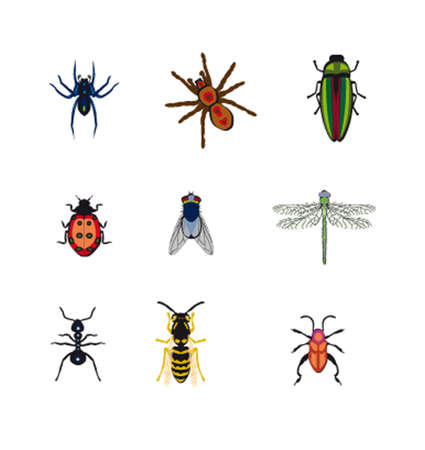 spider cartoon: Set the image of vector insects Illustration