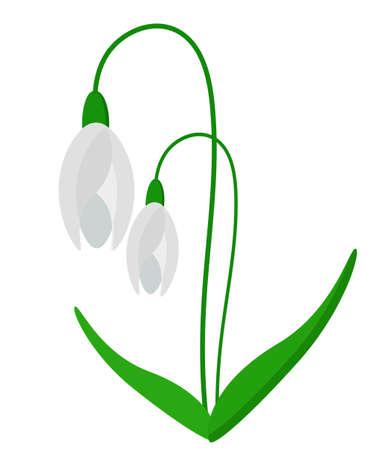 snowdrop: Snowdrop, Flower, Garden, Vector, Illustration
