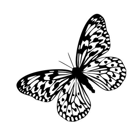 Butterfly, black silhouettes,abstract anima  Illustration