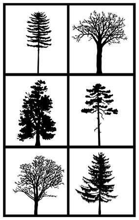 pino: Colecci�n de 6 �rboles en el fondo blanco aislado Vectores