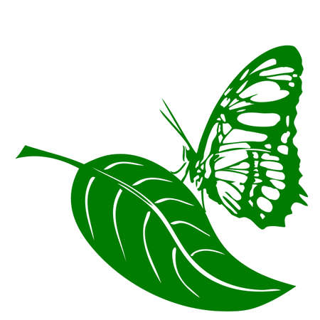 butterfly and leaf on white background Stock Vector - 16770759