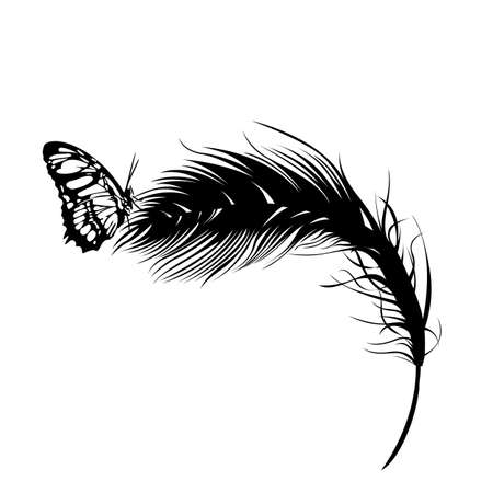 black feather: butterfly on a feather  Illustration