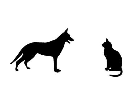 Black cat and dog on a white  background Vector