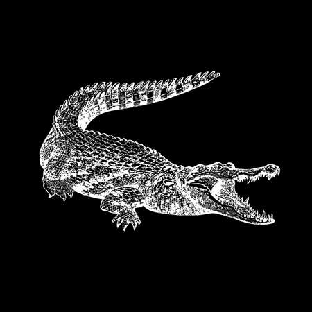 marsh: Crocodile on a black background