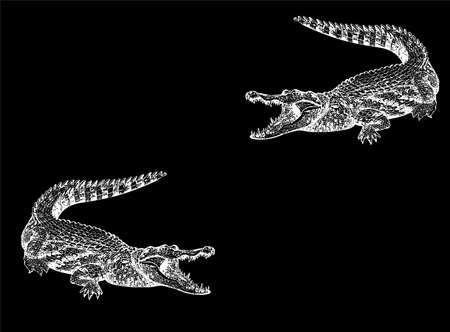 seize: Crocodile on a black background