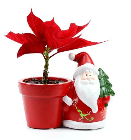 poinsettia and Santa Claus photo