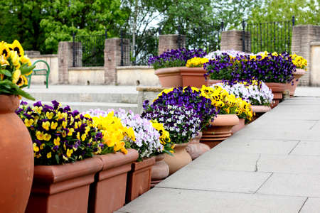 flower pots: Flower pots lining stair steps. Pots  decorations. Stock Photo