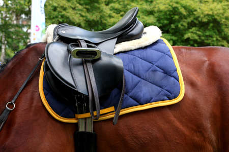 stirrup: Saddle with stirrups on a back of a horse