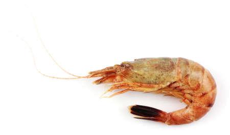 tiger shrimp: Close up of fresh boiled tiger shrimp isolated on white background Stock Photo