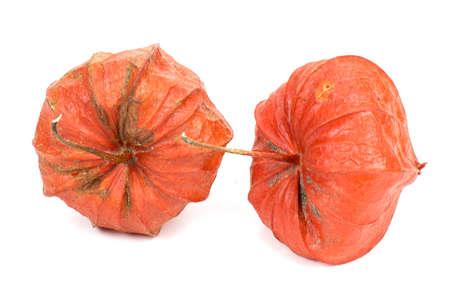 grosella: Alkekengi rojo del Physalis - uchuva Foto de archivo