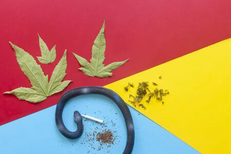 Cannabis plants, or marijuana leaves and Weed on colored paper background