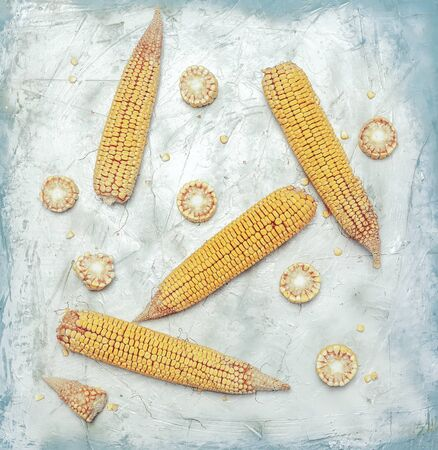 Shucked and cleaned sweet corn on bright blue background. Sweet corn cut on desk.