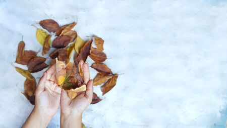 Woman holding autumn leaves.. Fall concept on bright background. Hand with fall leaves. Copy space for text and words Stock Photo