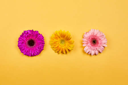 Colorful and fresh spring flowers on yellow. Beautiful daisy flowers 免版税图像