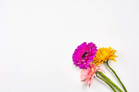 Colorful and fresh spring flowers on white. Beautiful daisy flowers