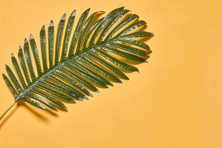 Tropical tree leaf. Palm tree leaf on a beige background with copy space. Travel, creative concepts 免版税图像