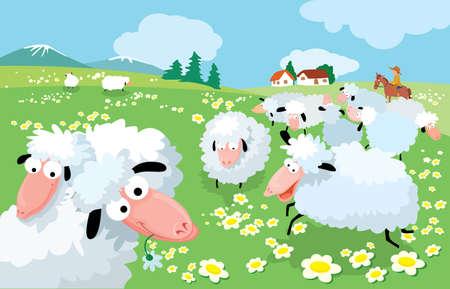 mountain meadow: En las altas monta�as de cr�a de ovejas  Vectores