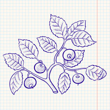 bilberry: Doodle bilberry Illustration