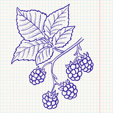 blackberry fruit: Doodle blackberry