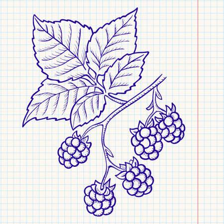 moras: Garabatear blackberry  Vectores