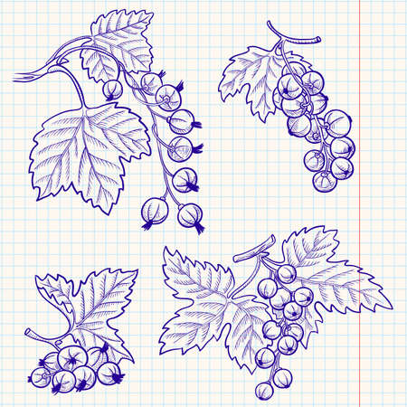 currants: Set of doodle red and black currant Illustration