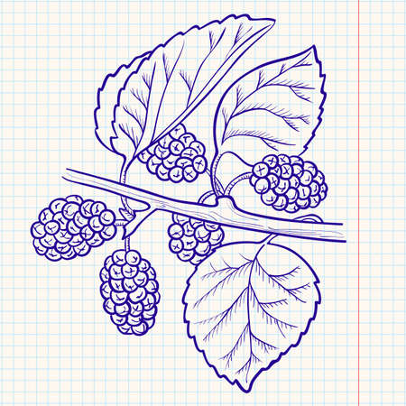 greengrocery: Doodle  mulberry