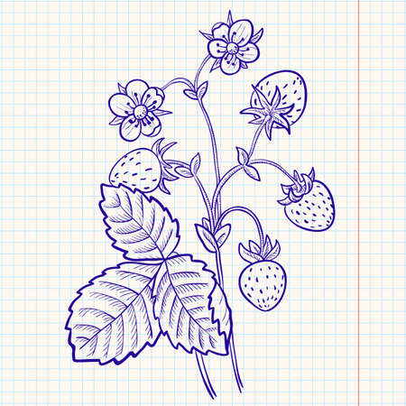 wild berry: Doodle strawberry Illustration
