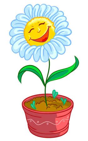kamille: Kamille in Topf  Illustration