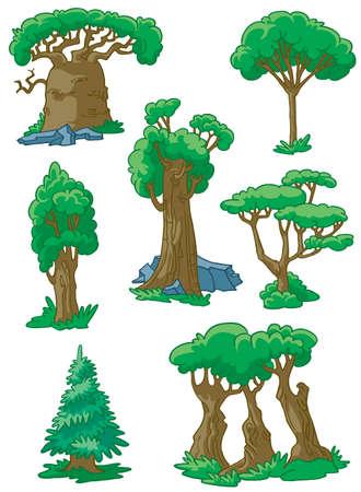 arbol alamo: �rboles establecer # 2 (baobab, Secoya, goma ar�biga, �lamo, roble, �rbol de pieles, arce)