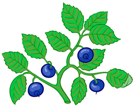 bilberry: Isolated illustration of bilberry branch