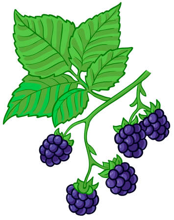 cartoon berries: Isolated illustration of blackberry branch