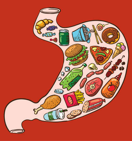 eating fast food: Stomach full of fast food Illustration