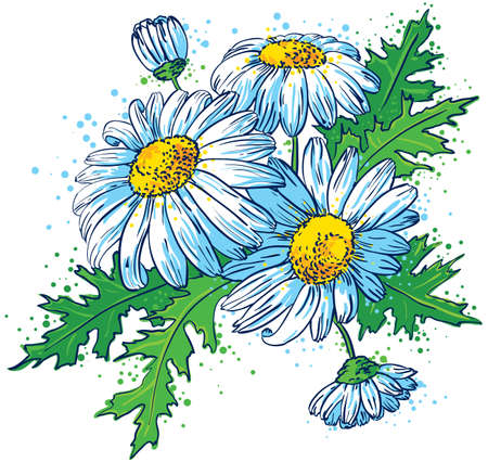 chamomile flower: Bouquet of Daisies