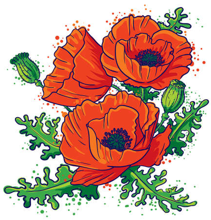 Bouquet of red poppies Stock Vector - 8895854
