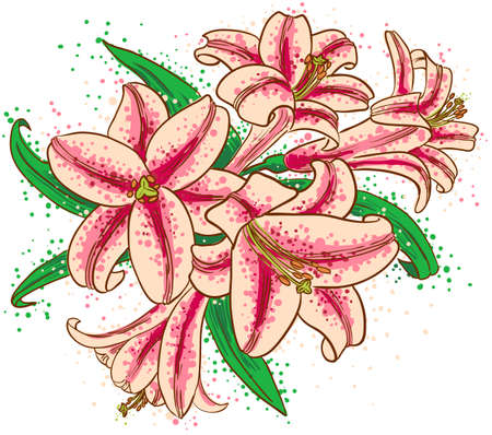 A bouquet of lilies Vector