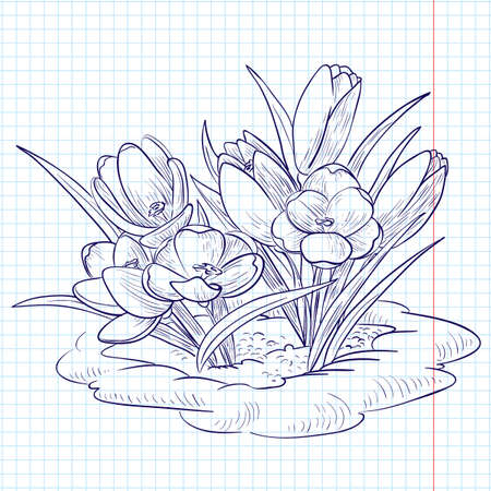 Doodle crocuses growing through snow Vector