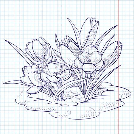 krokus: Doodle Krokussen groeien door sneeuw Stock Illustratie