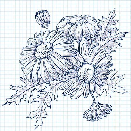 chamomiles: Bouquet of Daisies (chamomile) Illustration