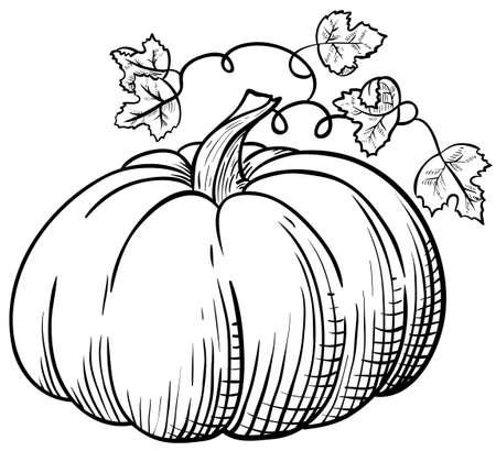 orange swirl: Pumpkin Illustration
