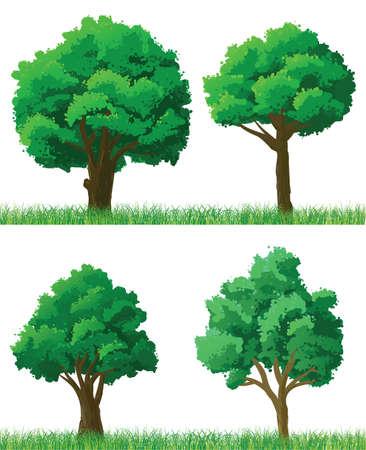 foglie di quercia: Alberi verdi ed erba set Vettoriali