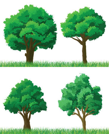 oaks: Green trees and grass set