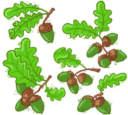acorns: Cute acorns set, vector illustration