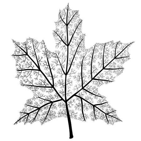 marple: Marple tree leaf shape Illustration