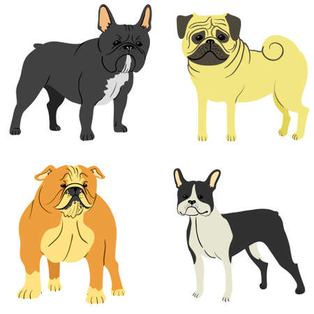 funny boston terrier: Cute dog breeds set (french boldog; english boldog; boston terrier,  pug-dog)