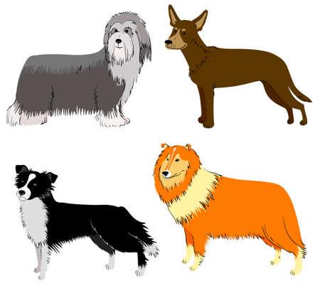 bearded: Cute dogs breeds set (collie, border collie, bearded collie, sheltie)