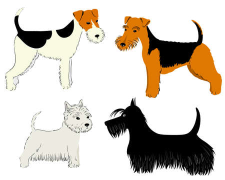 fox terrier: Cute dogs breeds set - Terrier collection Illustration